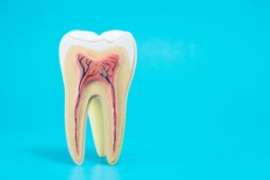 anatomy of a tooth against light blue background
